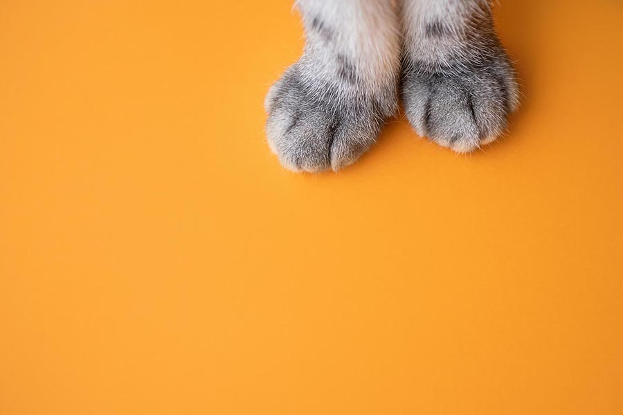 Paws of a gray cat on an orange background. Top view, minimalism. Cute picture. Concept of pets, cat grooming. Image for banner, place for text.